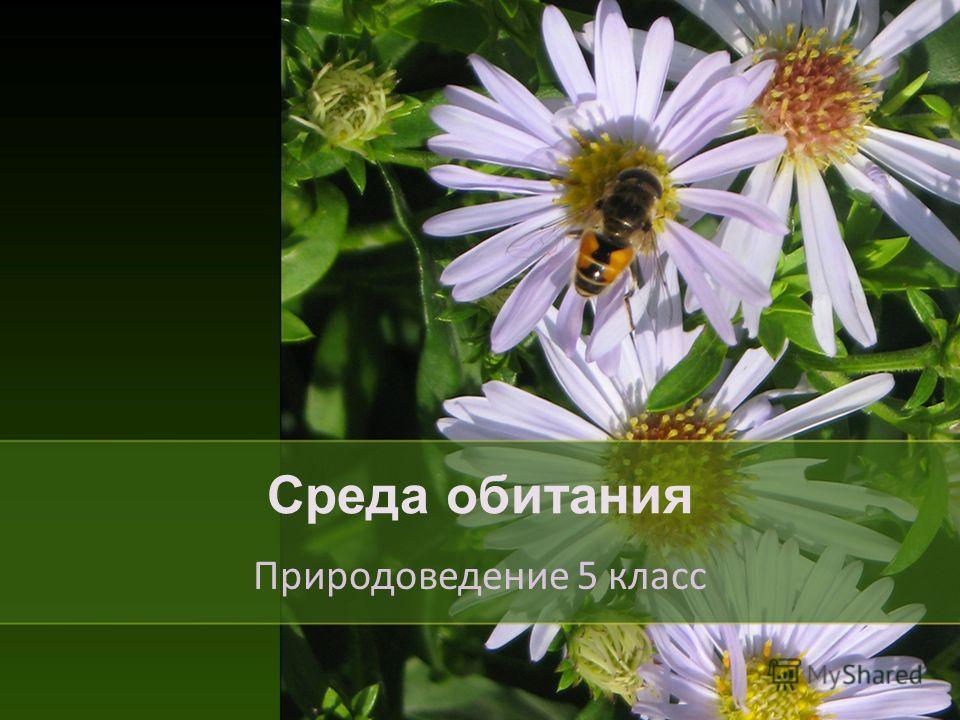 Среда обитания Природоведение 5 класс