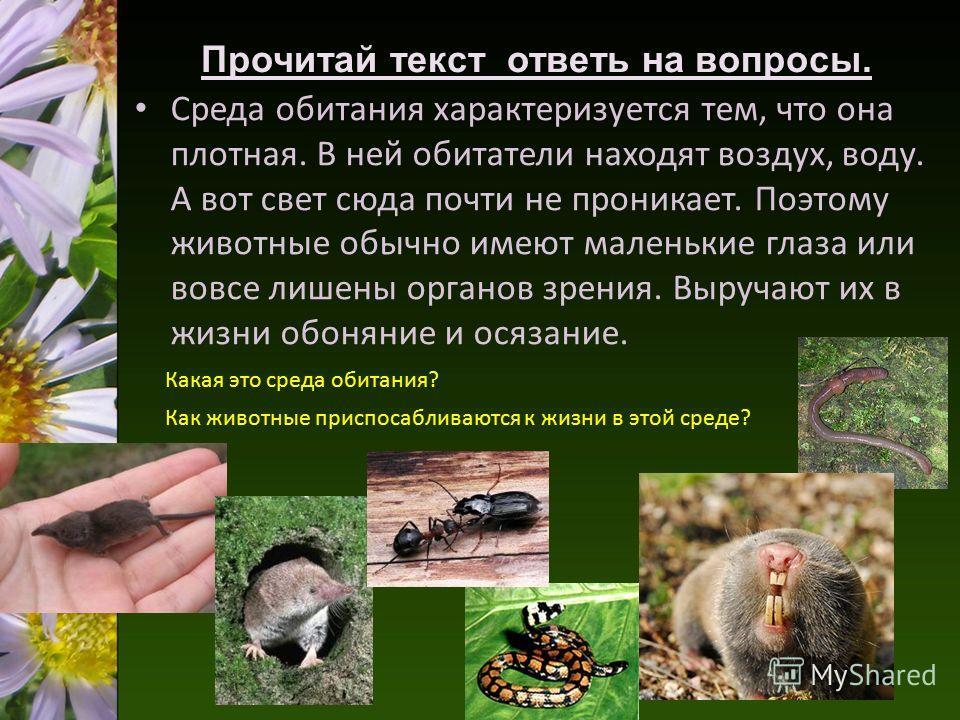 Среда обитания характеризуется тем, что она плотная. В ней обитатели находят воздух, воду. А вот свет сюда почти не проникает. Поэтому животные обычно имеют маленькие глаза или вовсе лишены органов зрения. Выручают их в жизни обоняние и осязание. Про