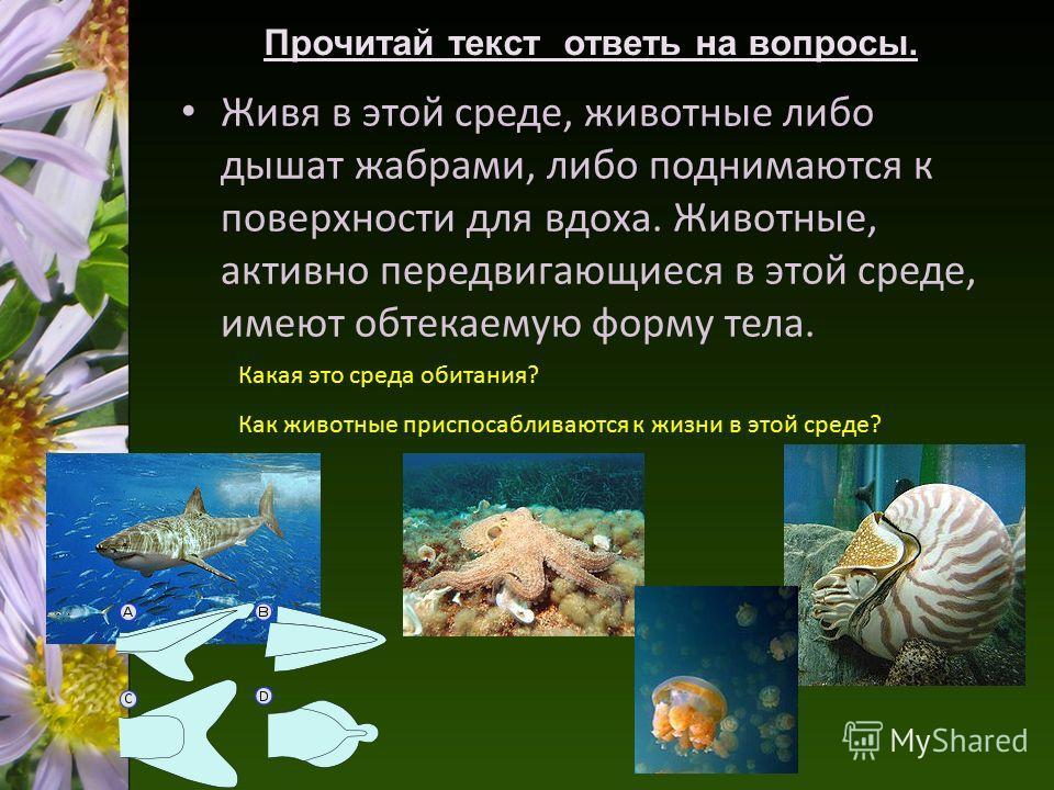 Живя в этой среде, животные либо дышат жабрами, либо поднимаются к поверхности для вдоха. Животные, активно передвигающиеся в этой среде, имеют обтекаемую форму тела. Прочитай текст ответь на вопросы. Какая это среда обитания? Как животные приспосабл