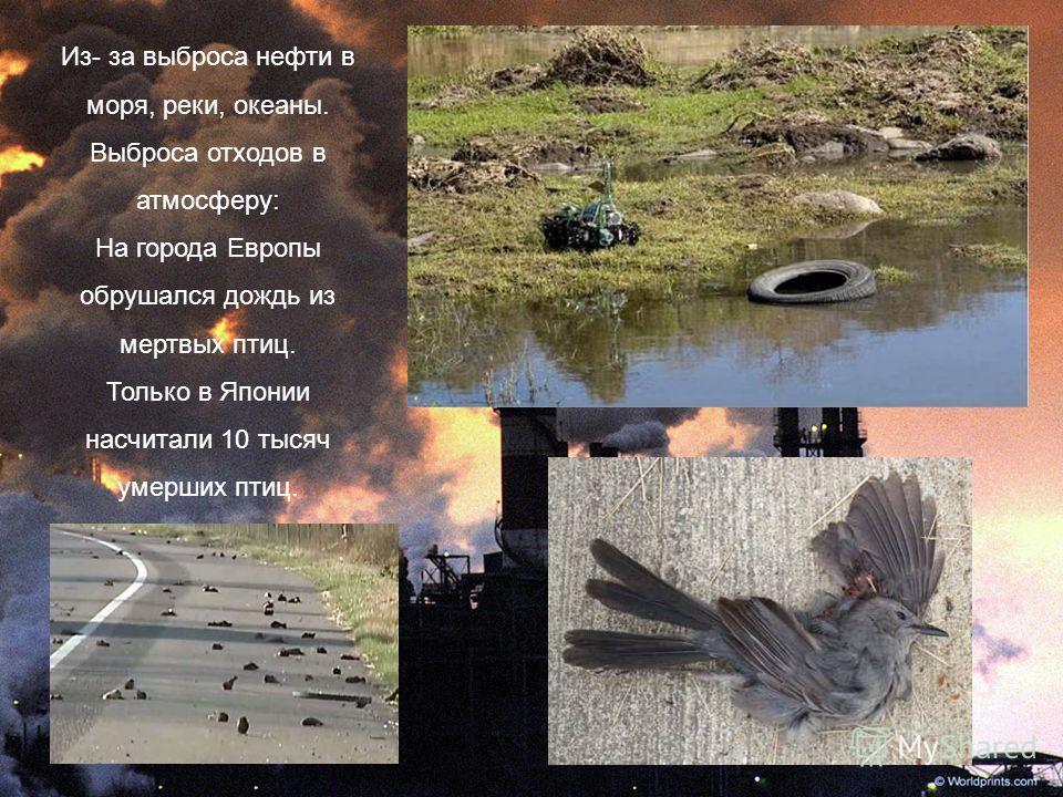 Из- за выброса нефти в моря, реки, океаны. Выброса отходов в атмосферу: На города Европы обрушался дождь из мертвых птиц. Только в Японии насчитали 10 тысяч умерших птиц.