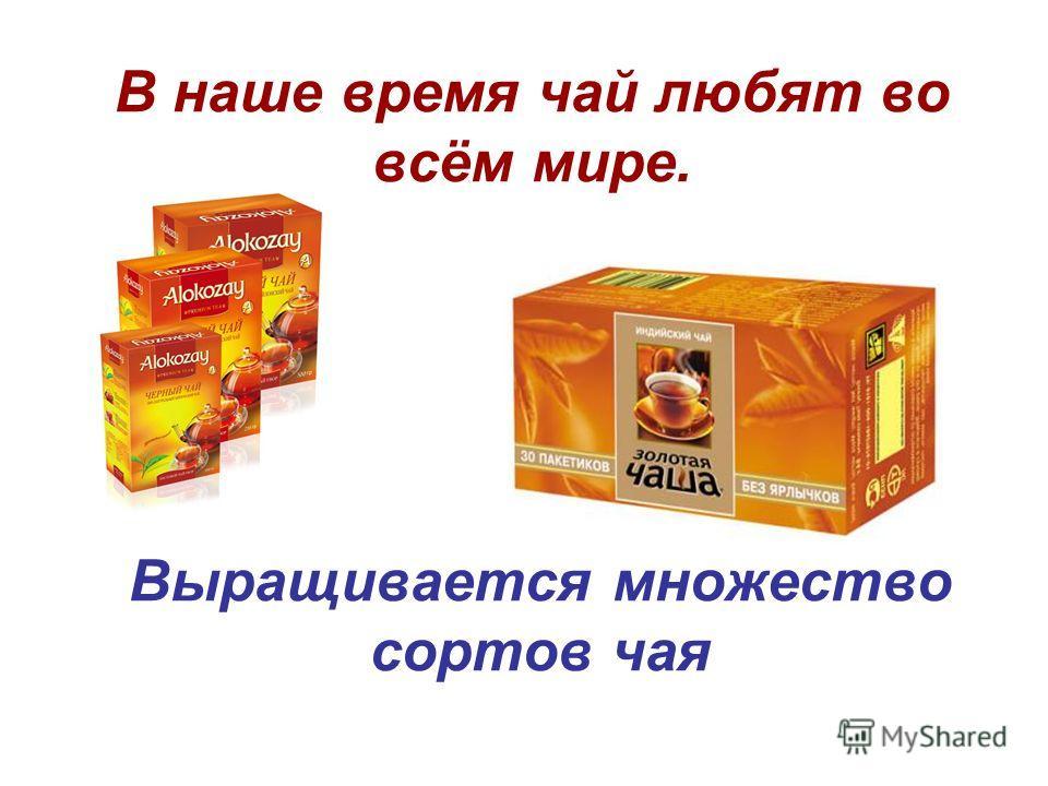 В наше время чай любят во всём мире. Выращивается множество сортов чая