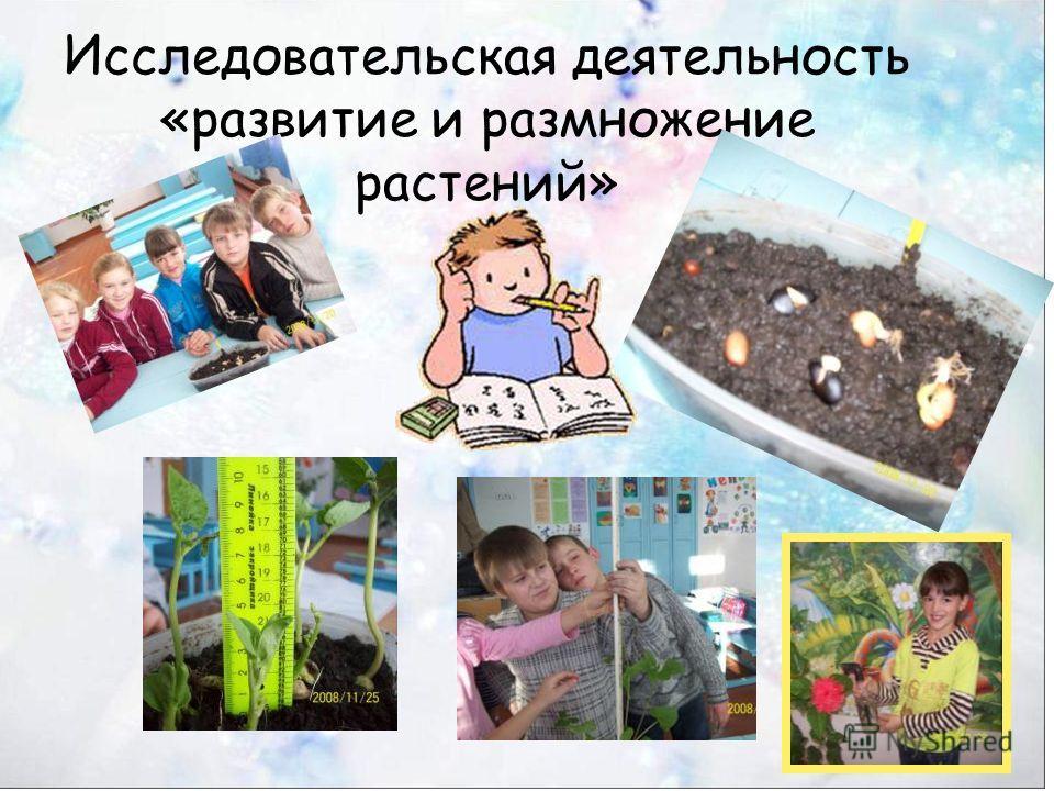 Исследовательская деятельность «развитие и размножение растений»
