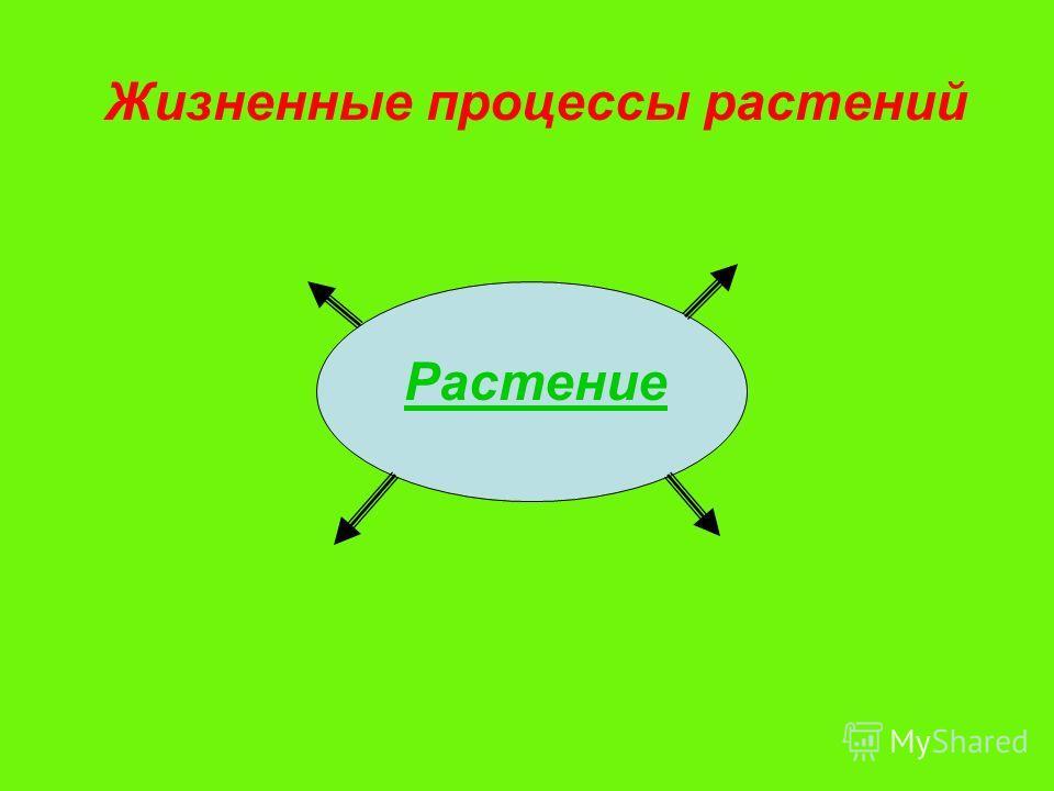 Жизненные процессы растений Растение