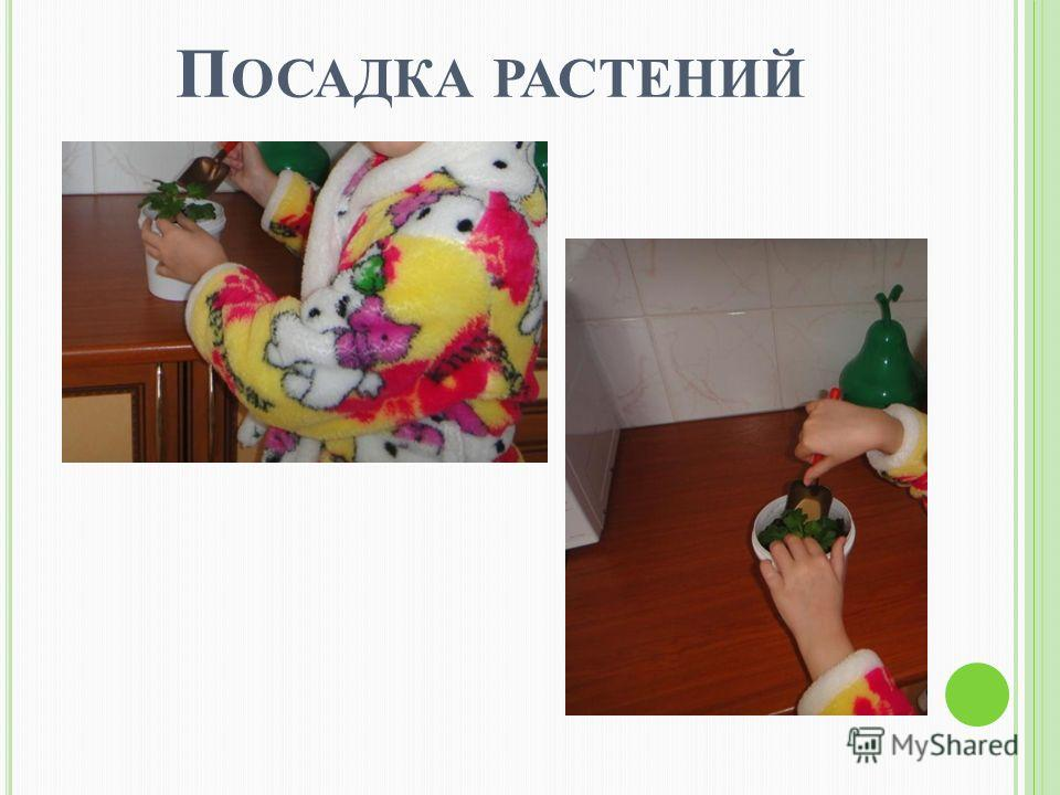 П ОСАДКА РАСТЕНИЙ