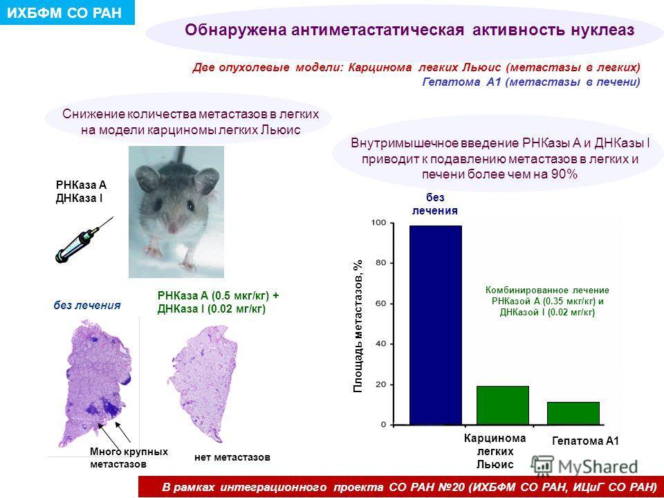 Обнаружена антиметастатическая активность нуклеаз Две опухолевые модели: Карцинома легких Льюис (метастазы в легких) Гепатома А1 (метастазы в печени) Внутримышечное введение РНКазы А и ДНКазы I приводит к подавлению метастазов в легких и печени более