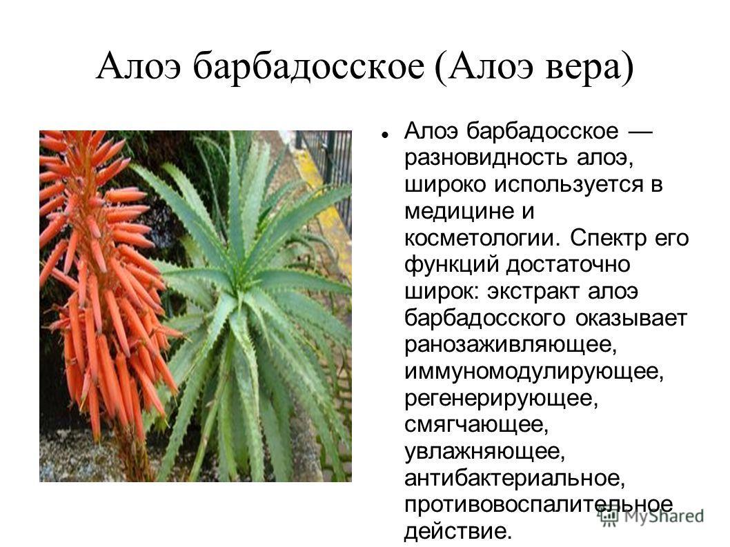 Алоэ барбадосское (Алоэ вера) Алоэ барбадосское разновидность алоэ, широко используется в медицине и косметологии. Спектр его функций достаточно широк: экстракт алоэ барбадосского оказывает ранозаживляющее, иммуномодулирующее, регенерирующее, смягчаю