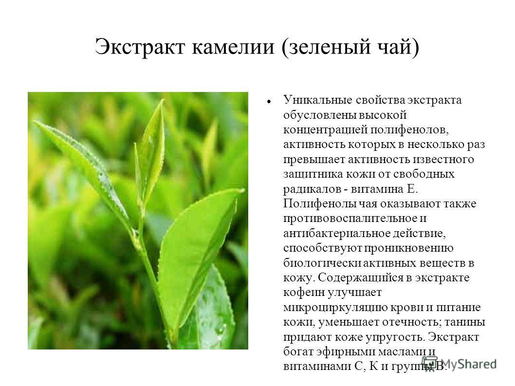 Экстракт камелии (зеленый чай) Уникальные свойства экстракта обусловлены высокой концентрацией полифенолов, активность которых в несколько раз превышает активность известного защитника кожи от свободных радикалов - витамина Е. Полифенолы чая оказываю