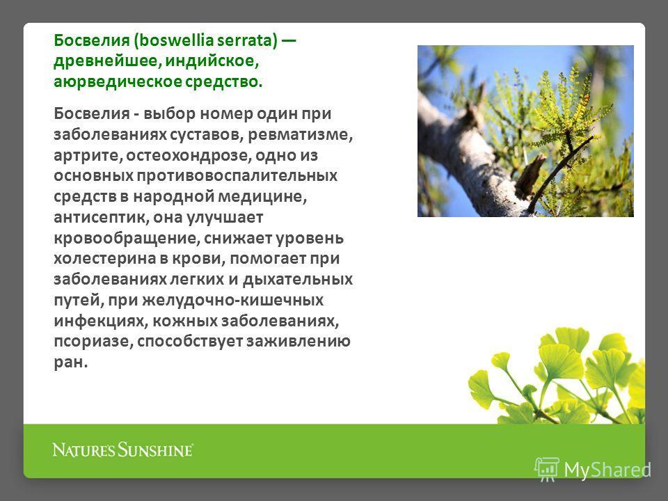 Босвелия (boswellia serrata) древнейшее, индийское, аюрведическое средство. Босвелия - выбор номер один при заболеваниях суставов, ревматизме, артрите, остеохондрозе, одно из основных противовоспалительных средств в народной медицине, антисептик, она