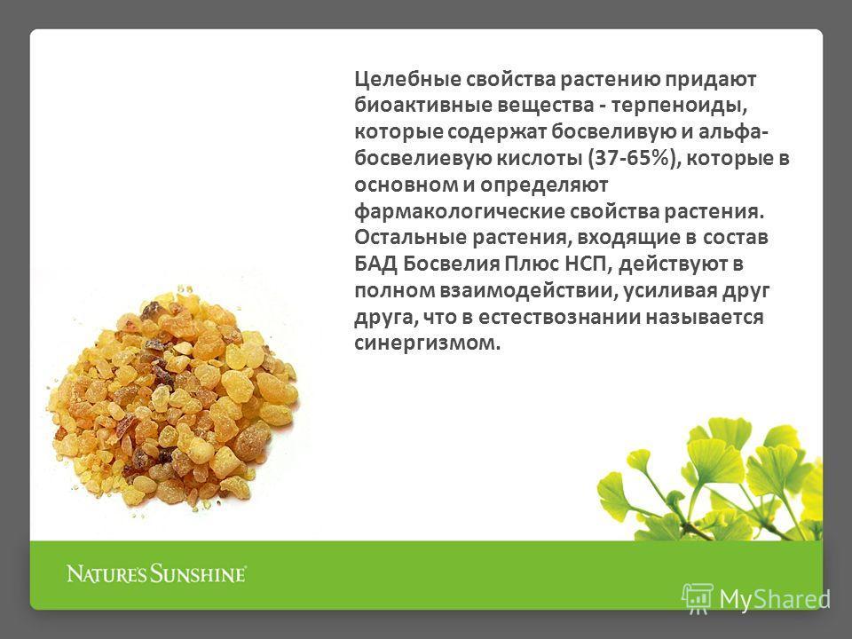 Целебные свойства растению придают биоактивные вещества - терпеноиды, которые содержат босвеливую и альфа- босвелиевую кислоты (37-65%), которые в основном и определяют фармакологические свойства растения. Остальные растения, входящие в состав БАД Бо