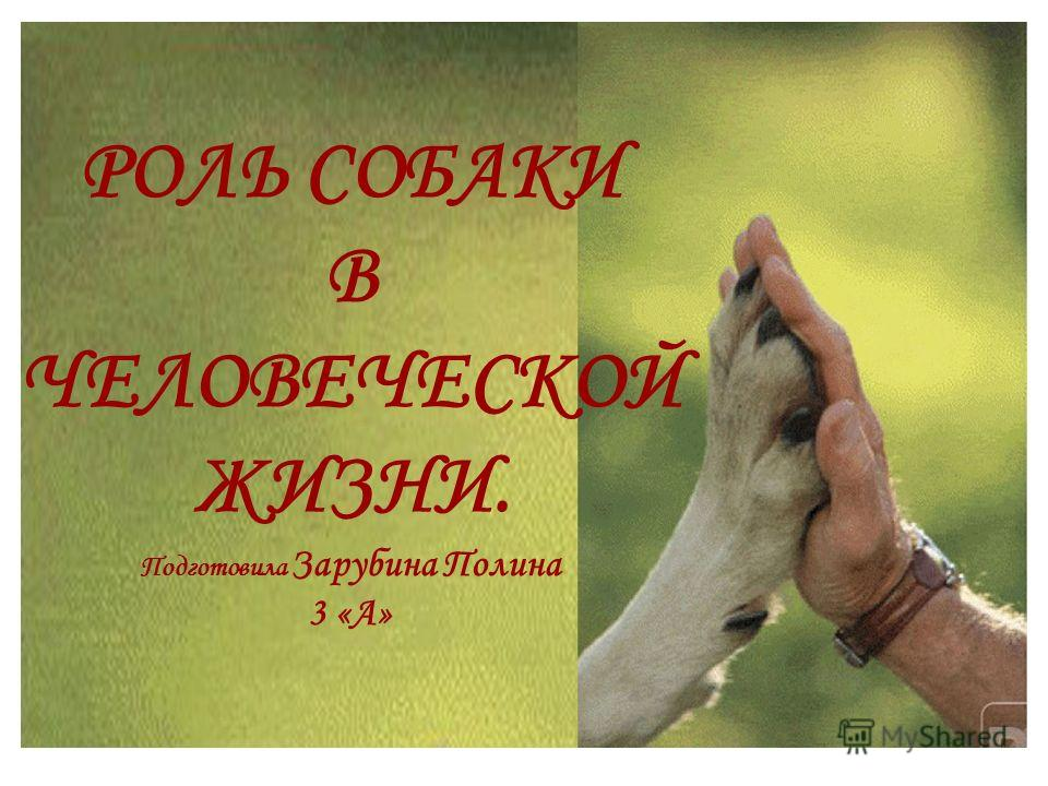 РОЛЬ СОБАКИ В ЧЕЛОВЕЧЕСКОЙ ЖИЗНИ. Подготовила Зарубина Полина 3 «А»