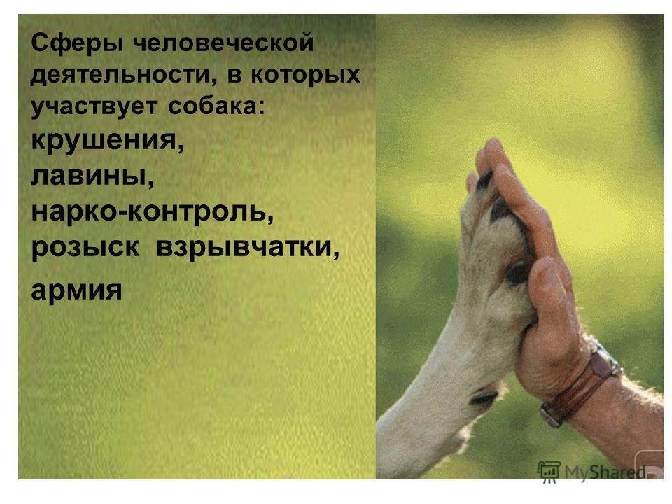 Сферы человеческой деятельности, в которых участвует собака: крушения, лавины, нарко-контроль, розыск взрывчатки, армия