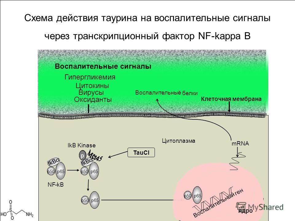 Схема действия таурина на воспалительные сигналы через транскрипционный фактор NF-kappa B Воспалительные сигналы Цитокины Вирусы Воспалительныё белки Гипергликемия ядро p50 p65 Воспалительный ген Оксиданты TauCl Цитоплазма mRNA Клеточнаямембрана p50
