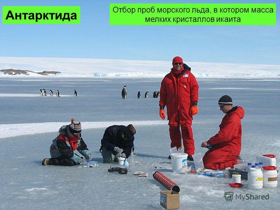 Антарктида Отбор проб морского льда, в котором масса мелких кристаллов икаита