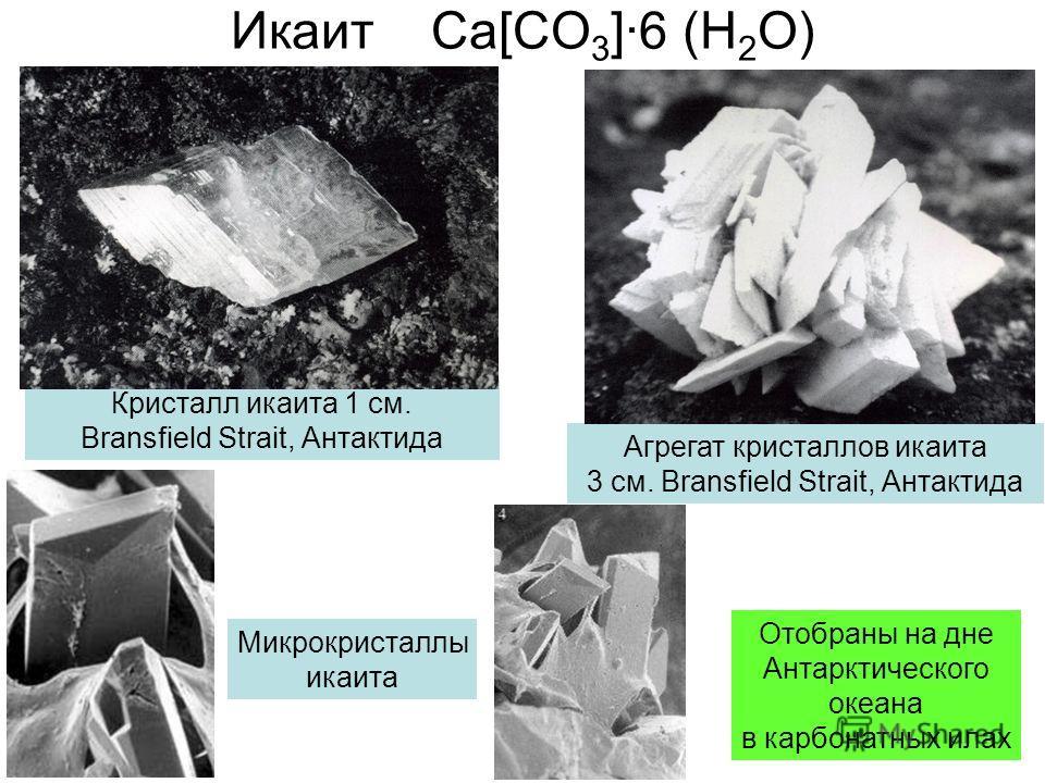 Икаит Ca[CO 3 ]·6 (H 2 O) Кристалл икаита 1 см. Bransfield Strait, Антактида Агрегат кристаллов икаита 3 см. Bransfield Strait, Антактида Микрокристаллы икаита Отобраны на дне Антарктического океана в карбонатных илах
