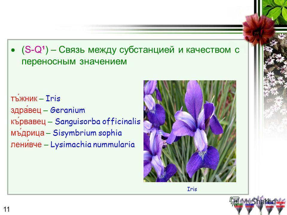 11 (S-Q¹) – Связь между субстанцией и качеством с переносным значением тъжник – Iris здравец – Geranium кървавец – Sanguisorba officinalis мъдрица – Sisymbrium sophia ленивче – Lysimachia nummularia Iris 11