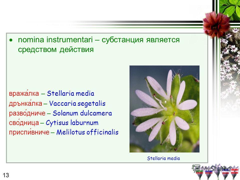 13 nomina instrumentari – субстанция является средством действия вража́лка – Stellaria media дрънкалка – Vaccaria segetalis разво́дниче – Solanum dulcamera сво́дница – Cytisus laburnum приспивниче – Melilotus officinalis Stellaria media 13