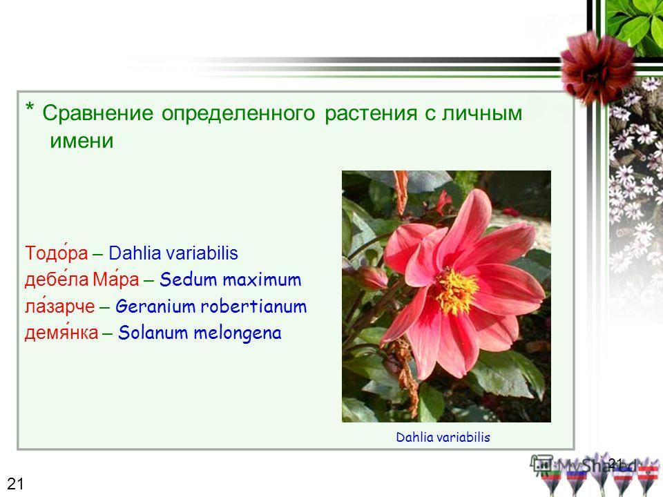 21 * Сравнение определенного растения с личным имени Тодо́ра – Dahlia variabilis дебе́ла Ма́ра – Sedum maximum лазарче – Geranium robertianum демянка – Solanum melongena Dahlia variabilis 21