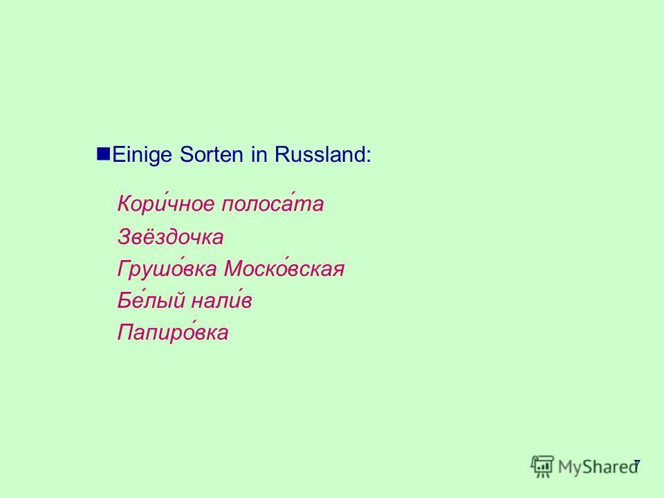7 Коричное полосата Звёздочка Грушовка Московская Белый налив Папировка Einige Sorten in Russland:
