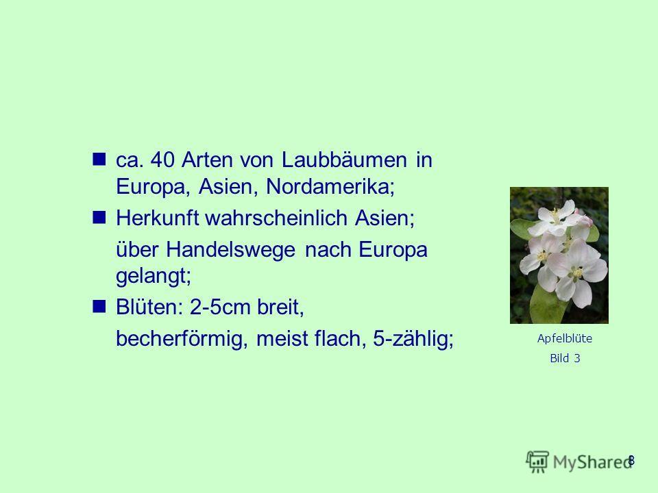 8 ca. 40 Arten von Laubbäumen in Europa, Asien, Nordamerika; Herkunft wahrscheinlich Asien; über Handelswege nach Europa gelangt; Blüten: 2-5cm breit, becherförmig, meist flach, 5-zählig; Apfelblüte Bild 3