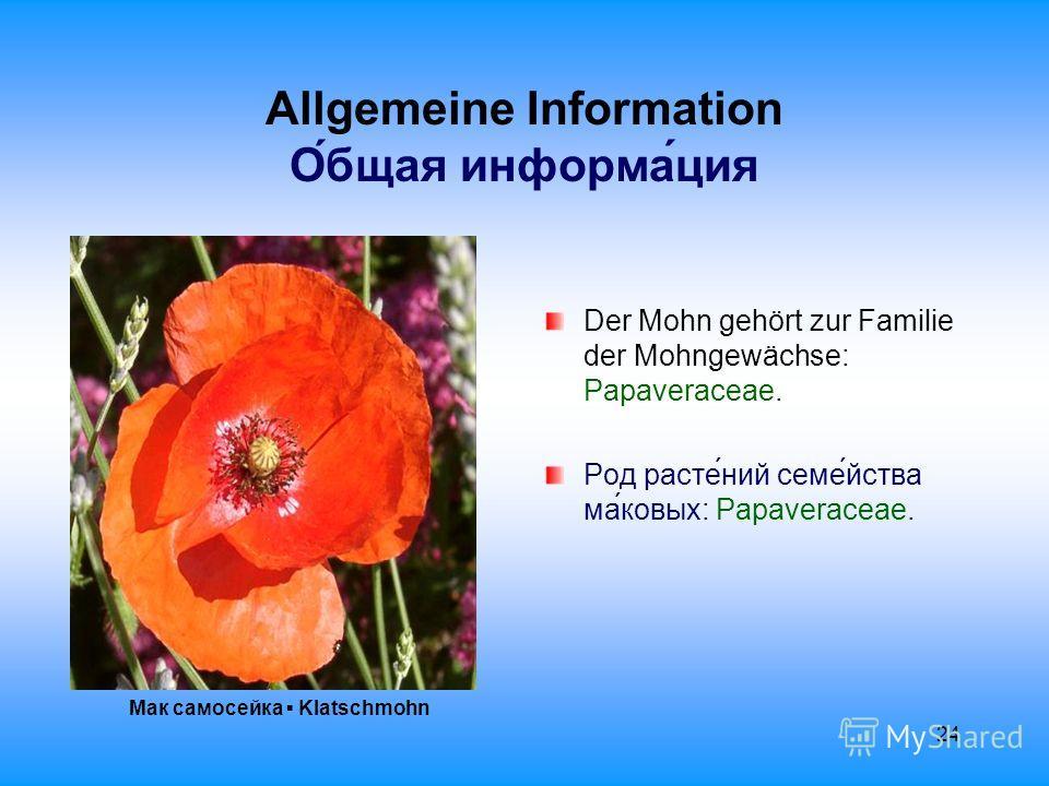 24 Allgemeine Information О́бщая информа́ция Мак самосейка Klatschmohn Der Mohn gehört zur Familie der Mohngewächse: Papaveraceae. Род расте́ний семе́йства ма́ковых: Papaveraceae.
