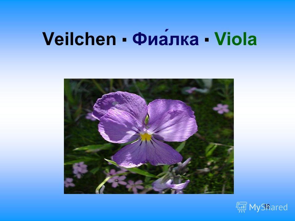 39 Veilchen Фиалка Viola
