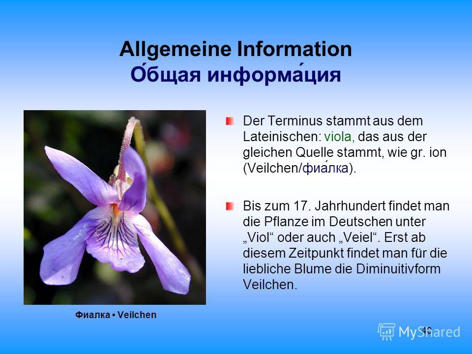 40 Allgemeine Information О́бщая информа́ция Фиалка Veilchen Der Terminus stammt aus dem Lateinischen: viola, das aus der gleichen Quelle stammt, wie gr. ion (Veilchen/фиалка). Bis zum 17. Jahrhundert findet man die Pflanze im Deutschen unter Viol od