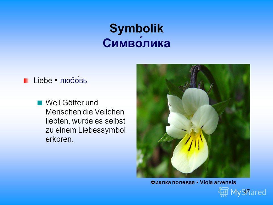 47 Symbolik Cимволика Liebe любовь Weil Götter und Menschen die Veilchen liebten, wurde es selbst zu einem Liebessymbol erkoren. Фиалка полевая Viola arvensis