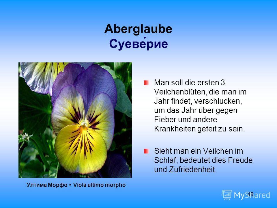 48 Aberglaube Суеверие Ултима Морфо Viola ultimo morpho Man soll die ersten 3 Veilchenblüten, die man im Jahr findet, verschlucken, um das Jahr über gegen Fieber und andere Krankheiten gefeit zu sein. Sieht man ein Veilchen im Schlaf, bedeutet dies F