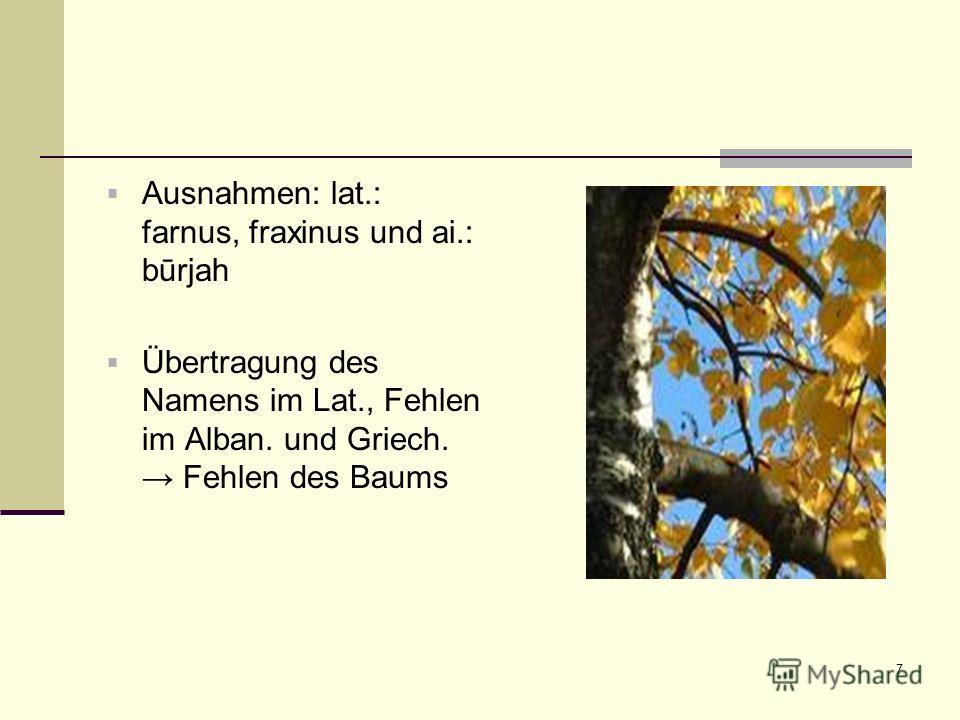 7 Ausnahmen: lat.: farnus, fraxinus und ai.: būrjah Übertragung des Namens im Lat., Fehlen im Alban. und Griech. Fehlen des Baums