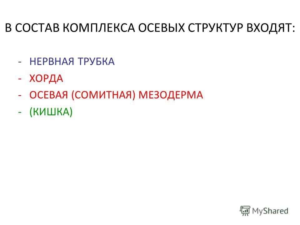 В СОСТАВ КОМПЛЕКСА ОСЕВЫХ СТРУКТУР ВХОДЯТ: -НЕРВНАЯ ТРУБКА -ХОРДА -ОСЕВАЯ (СОМИТНАЯ) МЕЗОДЕРМА -(КИШКА)