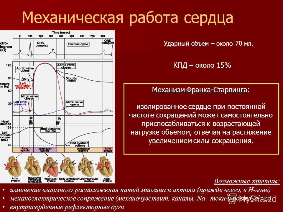 Возможные причины: изменение взаимного расположения нитей миозина и актина (прежде всего, в Н-зоне) механоэлектрическое сопряжение (механочувствит. каналы, Na + токи и рост Ca 2+ in ) внутрисердечные рефлекторные дуги Механизм Франка-Старлинга: изоли