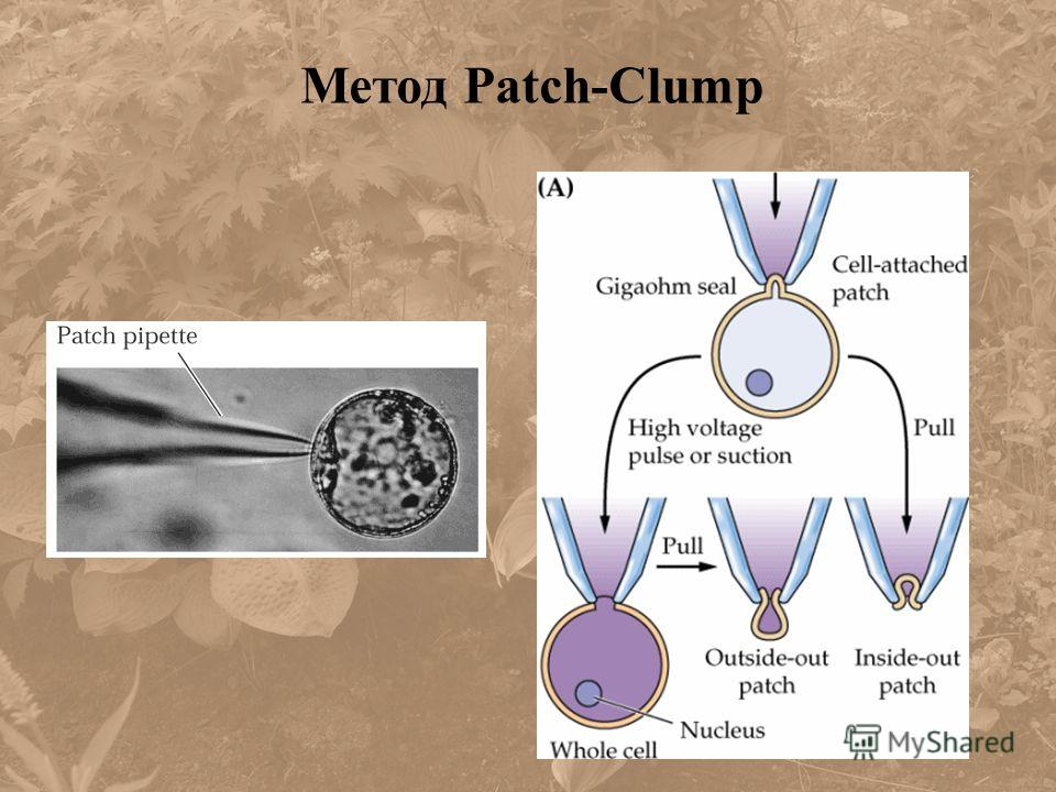Метод Patch-Clump