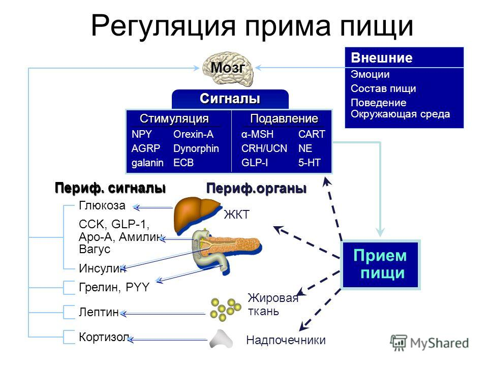 Регуляция прима пищи Мозг NPY AGRP galanin Orexin-A Dynorphin ECB Стимуляция α-MSH CRH/UCN GLP-I CART NE 5-HT Подавление Сигналы Глюкоза CCK, GLP-1, Apo-A, Aмилин Вагус Инсулин Грелин, PYY Лептин Кортизол Периф. сигналы Периф.органы ЖКТ Жировая ткань