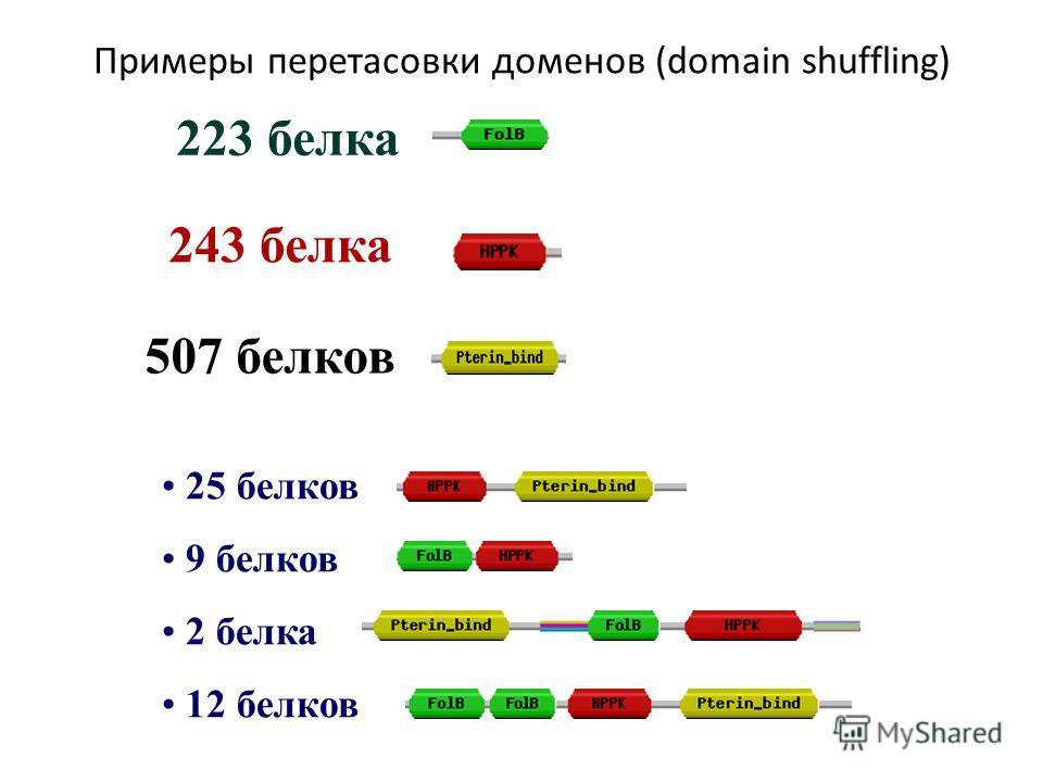 Примеры перетасовки доменов (domain shuffling) 25 белков 9 белков 2 белка 12 белков 223 белка 243 белка 507 белков