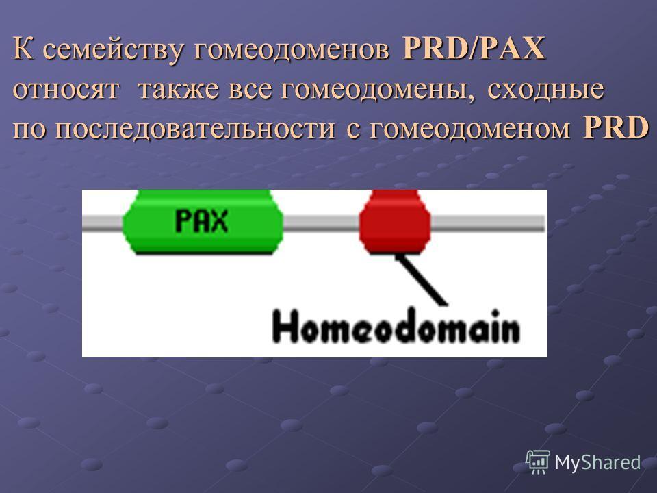 К семейству гомеодоменов PRD/PAX относят также все гомеодомены, сходные по последовательности с гомеодоменом PRD