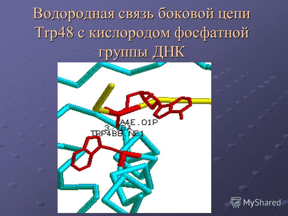 Водородная связь боковой цепи Trp48 c кислородом фосфатной группы ДНК
