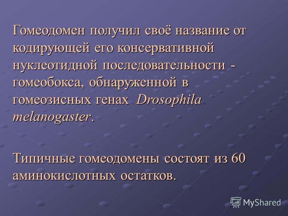 Гомеодомен получил своё название от кодирующей его консервативной нуклеотидной последовательности - гомеобокса, обнаруженной в гомеозисных генах Drosophila melanogaster. Типичные гомеодомены состоят из 60 аминокислотных остатков.