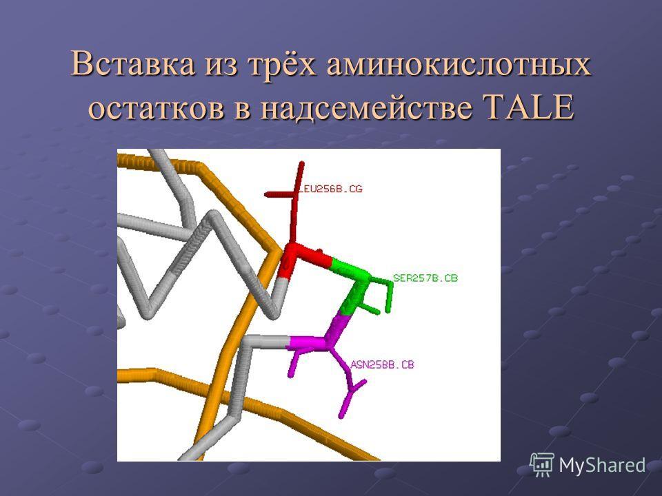 Вставка из трёх аминокислотных остатков в надсемействе TALE