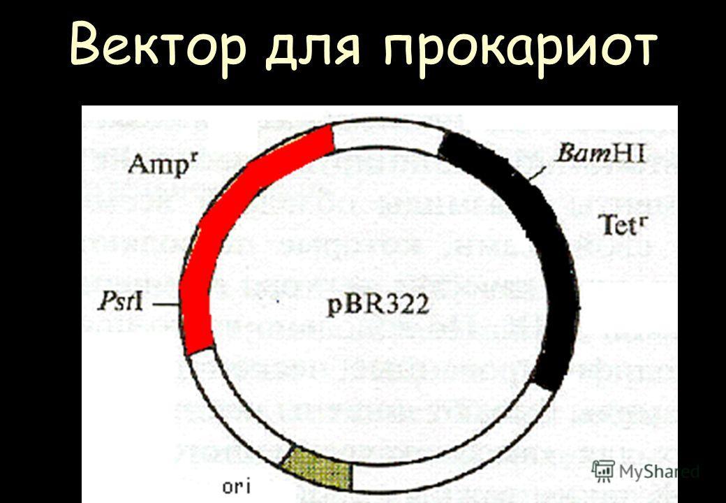 Вектор для прокариот
