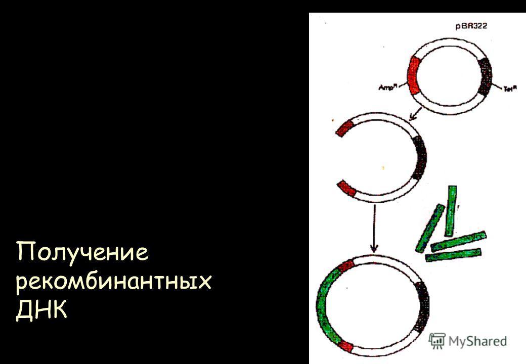 Получение рекомбинантных ДНК