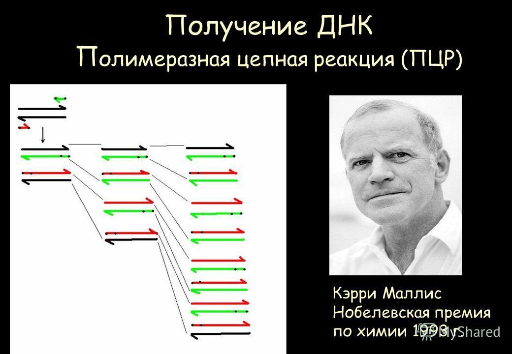 Получение ДНК П олимеразная цепная реакция (ПЦР) Кэрри Маллис Нобелевская премия по химии 1993 г.