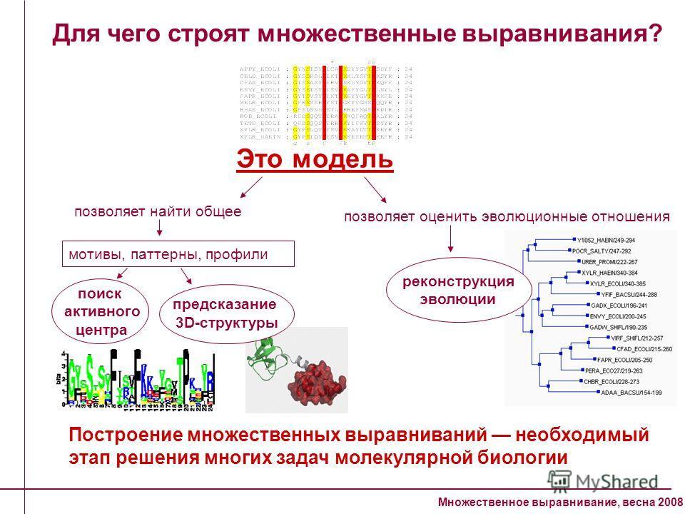 Множественное выравнивание, весна 2008 Для чего строят множественные выравнивания? Это модель позволяет оценить эволюционные отношения Построение множественных выравниваний необходимый этап решения многих задач молекулярной биологии поиск активного ц