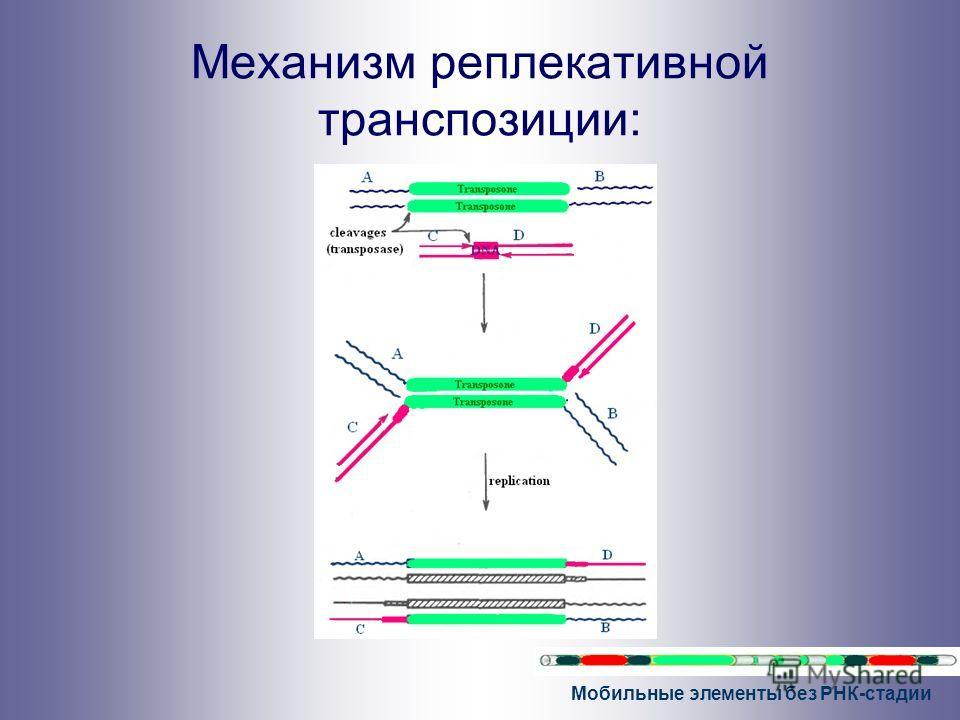 Мобильные элементы без РНК-стадии Механизм реплекативной транспозиции: