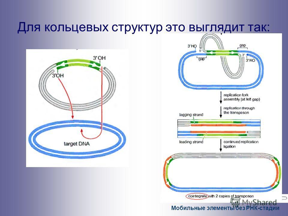 Мобильные элементы без РНК-стадии Для кольцевых структур это выглядит так: