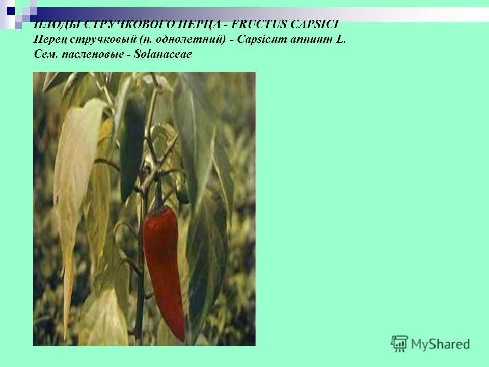 ПЛОДЫ СТРУЧКОВОГО ПЕРЦА - FRUCTUS CAPSICI Перец стручковый (п. однолетний) - Capsicum annuum L. Сем. пасленовые - Solanaceae