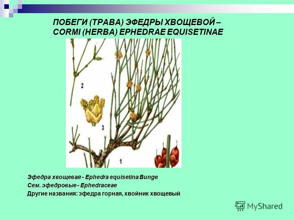 ПОБЕГИ (ТРАВА) ЭФЕДРЫ ХВОЩЕВОЙ – CORMI (HERBA) EPHEDRAE EQUISETINAE Эфедра хвощевая - Ephedra equisetina Bunge Сем. эфедровые - Ephedraceae Другие названия: эфедра горная, хвойник хвощевый