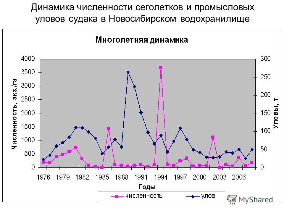 Динамика численности сеголетков и промысловых уловов судака в Новосибирском водохранилище