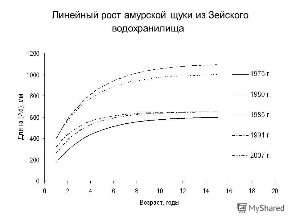 Линейный рост амурской щуки из Зейского водохранилища