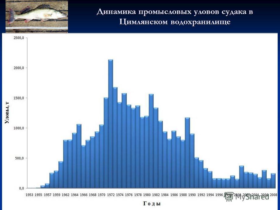 Динамика промысловых уловов судака в Цимлянском водохранилище