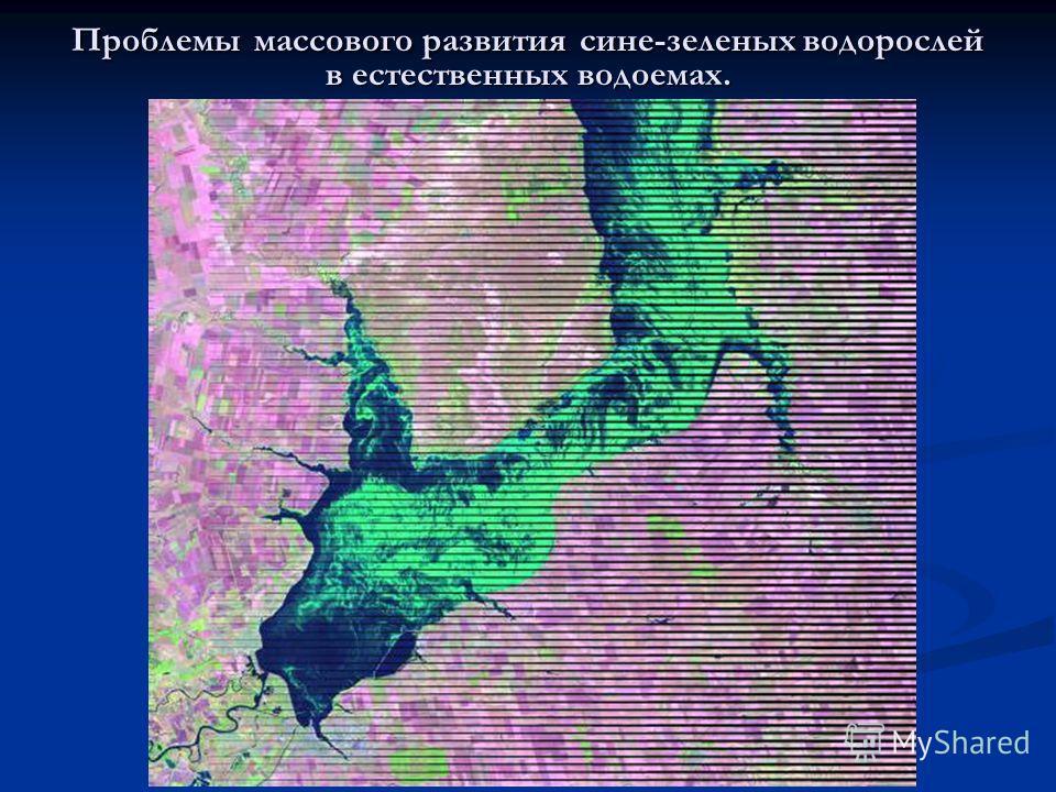 Проблемы массового развития сине-зеленых водорослей в естественных водоемах.
